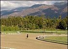 Santa Anita's Cushion Track.