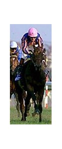 Montjeu, shown running fourth in the 1999 Japan Cup, will be seeking to defend his Arc de Triomphe title.