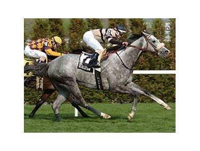 Dedication was a graded stakes winner in France and the United States.