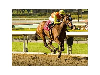 "Nashoba's Key glides home a powerful winner in the Santa Margarita (gr. I) March 9 at Santa Anita.<br><a target=""blank"" href=""http://www.bloodhorse.com/horse-racing/photo-store?ref=http%3A%2F%2Fpictopia.com%2Fperl%2Fgal%3Fprovider_id%3D368%26ptp_photo_id%3D3808796%26ref%3Dstory"">Order This Photo</a>"