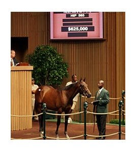 Hip #565; colt, Bernardini -- Ava Knowsthecode by Cryptoclearance brought $625,000 on Sept. 14 during the fourth session of the Keeneland September yearling sale.