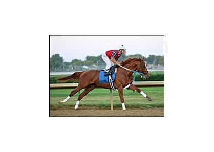 Curlin, working at Churchill Downs in final preparation for the Belmont Stakes.