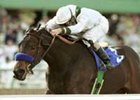 Champion Chilukki, retired to be bred to Storm Cat.