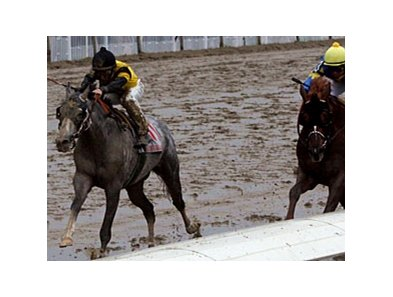 Macho Again won the New Orleans Handicap at Fair Grounds in his most recent start.
