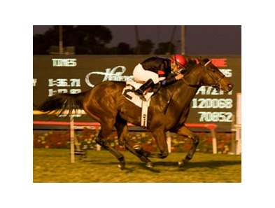 "Hollywood Derby winner The Usual Q. T. is one of the U.S.-based runners trying the Dubai Duty Free.<br><a target=""blank"" href=""http://www.bloodhorse.com/horse-racing/photo-store?ref=http%3A%2F%2Fpictopia.com%2Fperl%2Fgal%3Fprovider_id%3D368%26ptp_photo_id%3D8661028%26ref%3Dstory"">Order This Photo</a>"