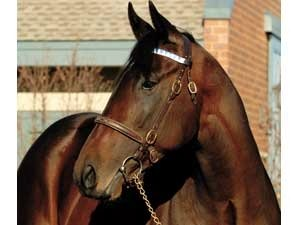 Street Sense Covers First Mare