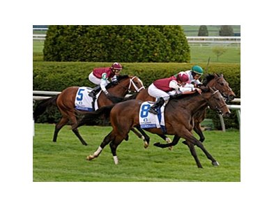 Stormalory won the Transylvania Stakes at Keeneland in April.