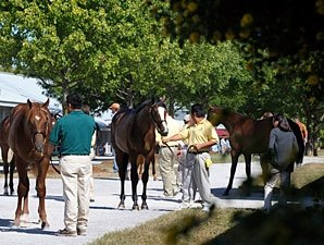 Keeneland Sale Delivers Growth and Stability
