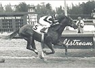 Spectacular Bid in the Florida Derby