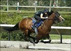 Forestry Colt Sets Pace in Fasig-Tipton Florida Workouts