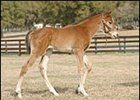 Honor Glide's First Foal