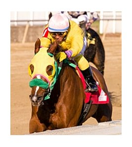 Rapid Redux, in 21st consecutive victory at Laurel on Dec. 13.