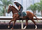 Criterion gallops in preparation for the QEII Cup April 25.