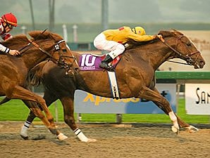 Grade I Winner Heatseeker Retired
