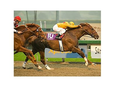 "Santa Anita Handicap (gr. I) winner Heatseeker(IRE) has been retired from racing. <br><a target=""blank"" href=""http://www.bloodhorse.com/horse-racing/photo-store?ref=http%3A%2F%2Fpictopia.com%2Fperl%2Fgal%3Fprovider_id%3D368%26ptp_photo_id%3D3740298%0D%0A%26ref%3Dstory"">Order This Photo</a>"