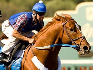 No Acceptable Bids for Curlin Interest