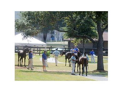 Inspecting horses at the Ocala Breeders' Sales Co. fall mixed sale.