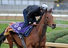 Midday stretches her legs at Churchill Downs on Wednesday.