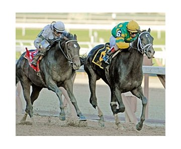 Atoned (green and yellow silks) will have his final Kentucky Derby (gr. I) prep in the $500,000 Illinois Derby (gr. II) April 5.