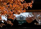 Keeneland Numbers Continue to Fall