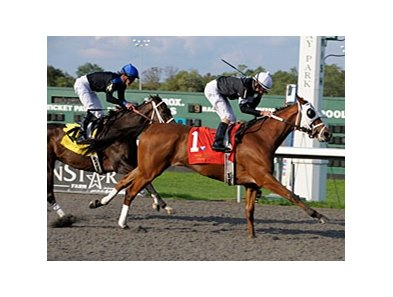 La Gran Bailadora is a multiple stakes winner on Polytrack at Turfway Park.