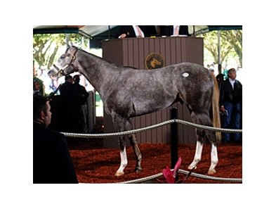 Hip #75; colt; Unbridled's Song - Amazing Buy by High Yield brought $1.1 million at the Fasig-Tipton Florida select sale of 2-year-olds in training.