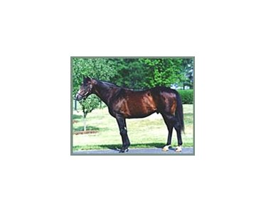 Danzig, now a pensioner at Claiborne Farm.
