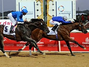 Desert Party Ready For Godolphin Mile