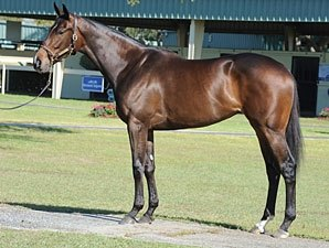 Sweet Dreams Brings Sweet $500,000 Price