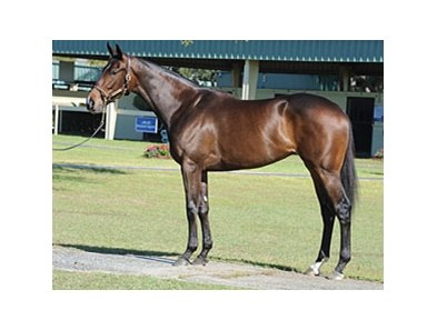 Hip# 320; Sweet Dreams, filly (Bernardini - Turbo Dream by Unbridled) brought $500,000 during the second session of the Ocala Breeders' Sales Co. March select sale of 2-year-olds in training in Central Florida.