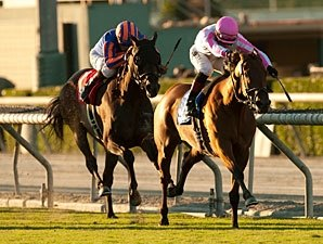 Rosario, Dubawi Heights Wrap Up Yellow Ribbon