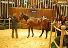 Sale topper at the Arqana Deauville August yearling sale, an Invincible Spirit colt.