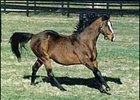 Lyphard, seen here in a 1987 photo, dead at 36 after distinguished career at stud.