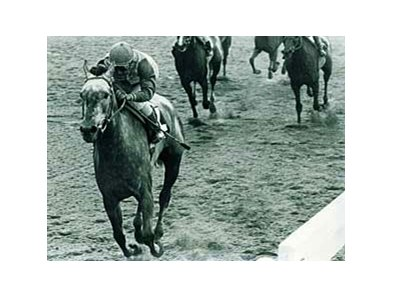 Christmas Past, shown winning the 1982 Coaching Club American Oaks.