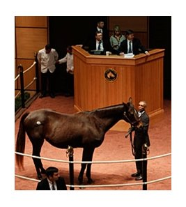 Fancy Prancer, hip 332, sold for $200,000 during the Fasig-Tipton Kentucky winter mixed sale in Lexington.
