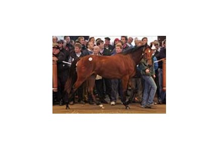 Sadler's Wells filly tops day one of Tattersalls yearling sale.