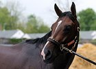 Tale of Verve a Go for Preakness, Mr. Z Out