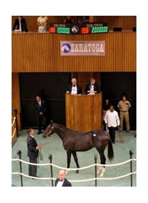 Storm Cat - Get Lucky by Mr. Prospector,  brought $2 Million at the 2008 Fasig-Tipton Saratoga selected yearling sale.
