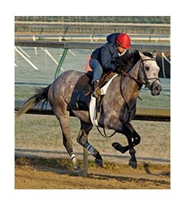"Paddy O'Prado<br><a target=""blank"" href=""http://www.bloodhorse.com/horse-racing/photo-store?ref=http%3A%2F%2Fpictopia.com%2Fperl%2Fgal%3Fprovider_id%3D368%26ptp_photo_id%3D9256655%26ref%3Dstory"">Order This Photo</a>"