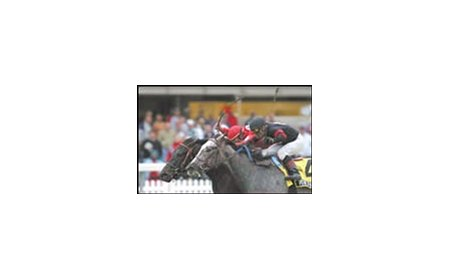 Offlee Wild, with jockey in red cap, is among the Fountain of Youth favorites.