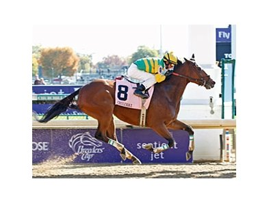 Distinctive Dixie rolls to victory in the Chilukki.