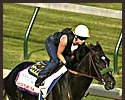 War Emblem, with Dana Barnes aboard, worked at Churchill Downs Tuesday morning.