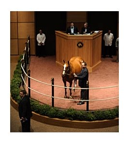 Funny Moon, hip 105, sold for $2.3 Million during the Fasig-Tipton November Sale.