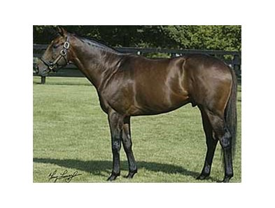 First-crop sire Ghostzapper has several offspring attracting attention in the Fasig-Tipton Saratoga Yearling Sale.