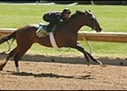 Pulpit colt, during first under tack show for Keeneland's April 2-year-olds in training sale.