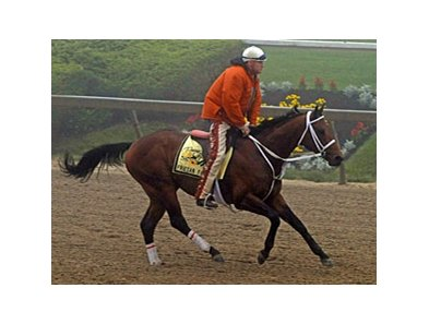 "Friesan Fire training at Pimlico Preakness Week.<br><a target=""blank"" href=""http://www.bloodhorse.com/horse-racing/photo-store?ref=http%3A%2F%2Fpictopia.com%2Fperl%2Fgal%3Fprovider_id%3D368%26ptp_photo_id%3D8113168%26ref%3Dstory"">Order This Photo</a>"