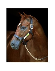 Groovy, in a portrait shot in 2000 at WinStar Farm.