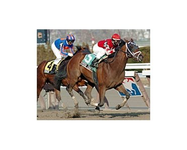 Saratoga County surpise winner in Gotham.