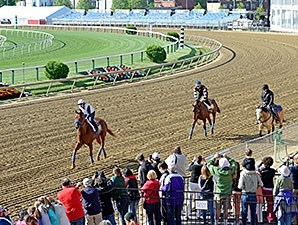 Dortmund and American Pharoah - Pimlico, May 14, 2015.