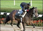 Ashado, breezed at Belmont Park Monday.